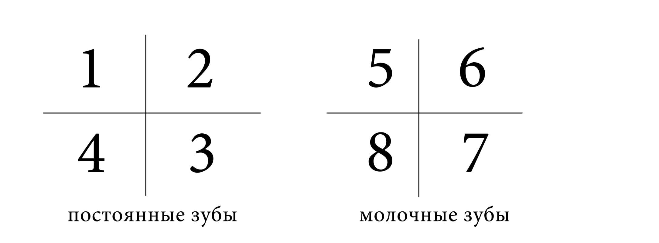 Нумерация сегментов зубных рядов по ВОЗ